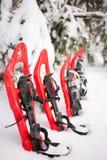 雪靴在森林里 免版税图库摄影