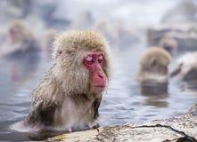 雪猴子公园 免版税库存照片