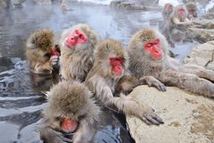 雪猴子公园 免版税图库摄影