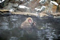 雪猴子在Jigokudani猴子公园(长野) 库存照片