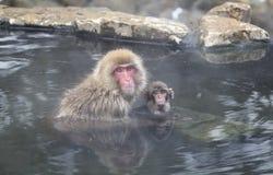 雪猴子在Jigokudani猴子公园(长野) 图库摄影
