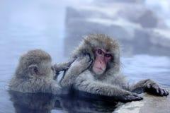 雪猴子 图库摄影