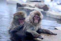 雪猴子 免版税库存图片