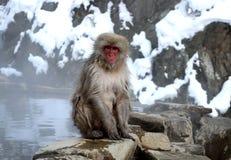 雪猴子 库存图片