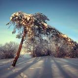 在树的银色霜在一个晴天在冬天 免版税库存图片