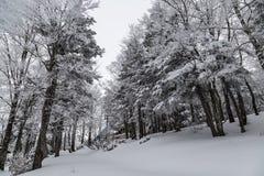 雪滑雪胜地在日本 免版税库存照片