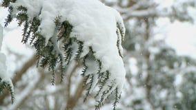 雪1 9 影视素材