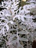 雪beaty植物 免版税图库摄影