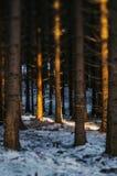 雪harz的日落森林 免版税库存照片