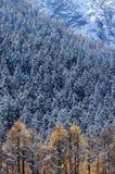 雪moutain和森林 库存照片