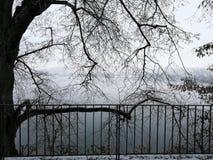雪Tree湖冬天 免版税图库摄影