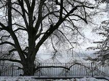 雪Tree湖冬天 库存图片