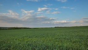 雷云的运动在冬麦的领域的在早期的春天在唐的浩大的干草原 股票录像