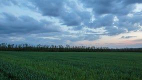 雷云的运动在冬麦的领域的在早期的春天在唐的浩大的干草原 影视素材
