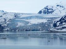 雷德冰川,冰河海湾国家公园更加接近的看法  免版税图库摄影