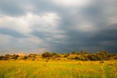 雷暴风景,南非 库存图片
