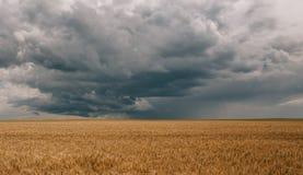 雷暴飓风覆盖领域农业庄稼麦子 库存照片