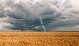 雷暴飓风覆盖领域农业庄稼麦子 免版税库存照片
