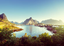 雷讷村庄, Lofoten海岛,挪威 免版税库存图片