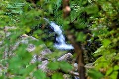 雷诺雨林瀑布 免版税库存图片