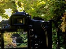 雷诺雨林瀑布 库存图片