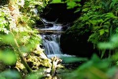 雷诺雨林瀑布 免版税图库摄影