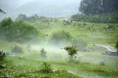 雹暴和雾在森林里 免版税库存照片