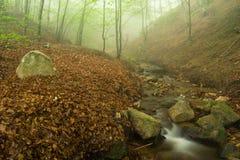 雾、小河和森林。 免版税图库摄影