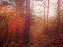 雾、秋天季节和死的自然的红色森林 免版税库存图片