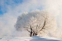 雾冬天 库存图片