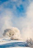 雾冬天 免版税库存图片