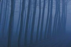 雾冬天 免版税图库摄影
