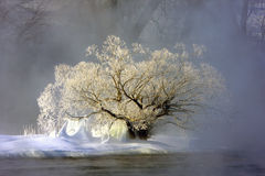 雾冻结的结构树 免版税库存照片