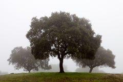 雾包围的结构树 免版税图库摄影