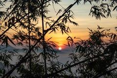 雾和太阳在竹树后 免版税库存照片