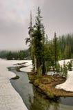 雾和杉木沿Creek国王在春天,拉森火山国家公园 库存照片