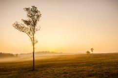雾和树 图库摄影