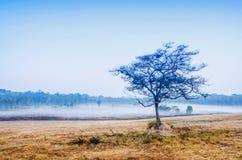 雾和树 免版税库存照片