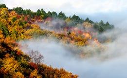 雾和森林 库存照片