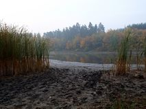 雾和泥泞的岸的Forest湖 免版税库存图片