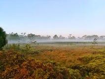 雾和薄雾在草原冬天早晨 免版税图库摄影