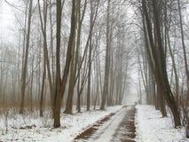 雾和路的2月树丛 库存照片
