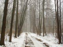 雾和路的2月树丛 免版税库存照片