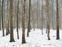 雾和雪的2月树丛 免版税库存图片