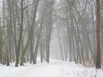雾和雪的2月树丛 免版税库存照片