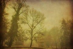 雾在公园在第一雪以后的冬天 库存照片