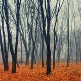 雾在公园 图库摄影