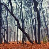 雾在公园 库存图片