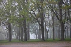 雾在公园 免版税库存图片
