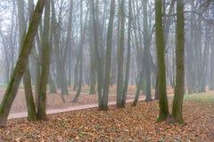 雾在公园 库存照片